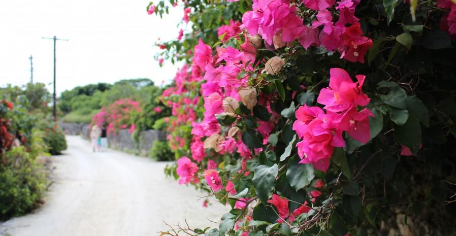 沖縄、竹富島集落は集落全体があったかいパワースポット